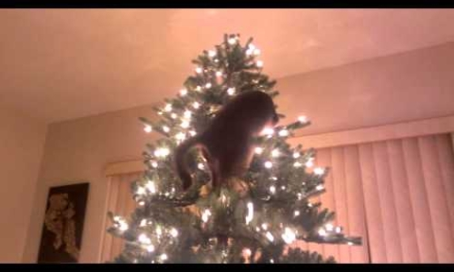 Uh Oh! Cat Meets Christmas Tree