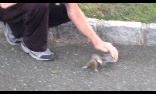 The Squirrel Whisperer